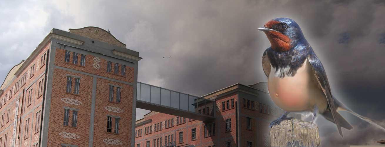De Avond van de Zwangere Zwaluw